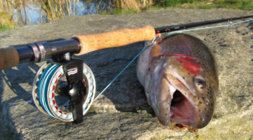 Fly Fishing Basics – Some Tips For Getting Started