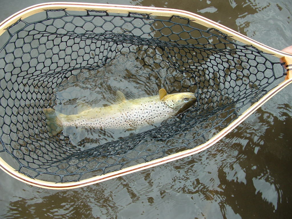 Fly fishing cpr catch photograph release fun times for How to make a fishing net