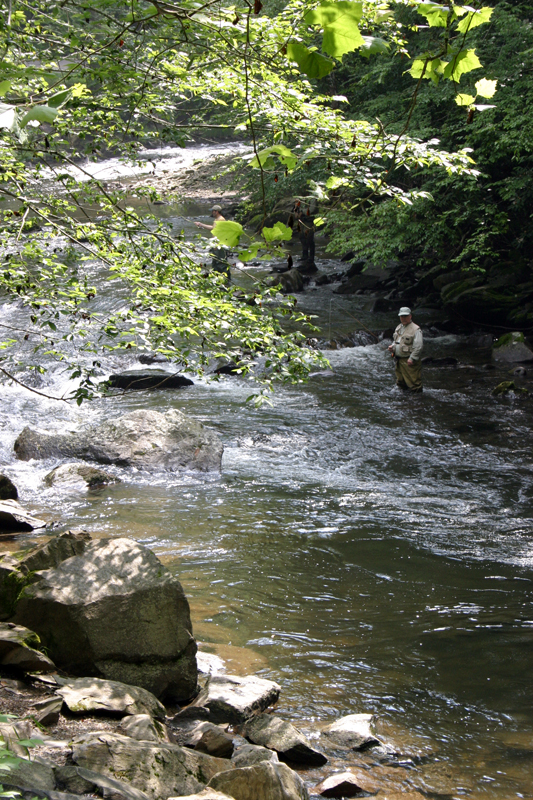 The best trout fishing hotspots for fly fishermen the for Fishing in gatlinburg tn
