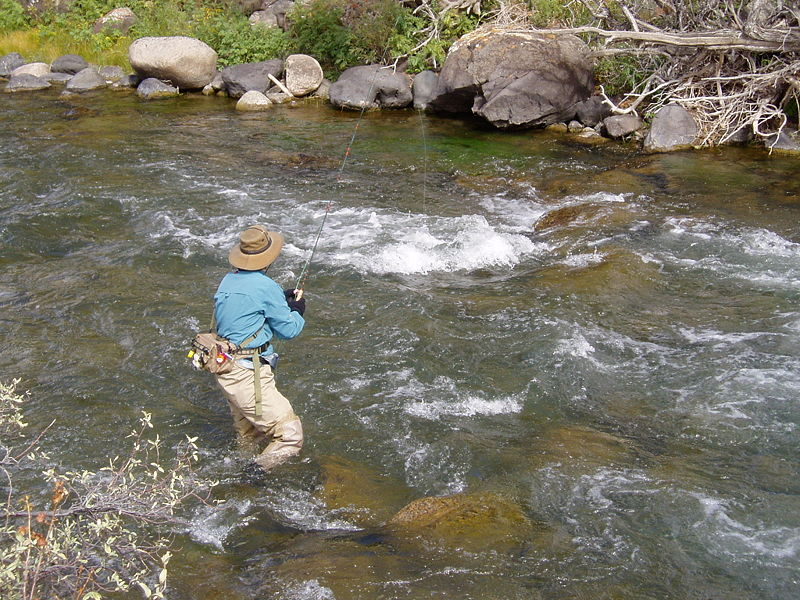 The best trout fishing hotspots for fly fishermen fun for River trout fishing