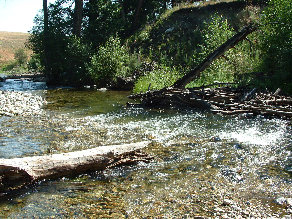 The trout underground fly fishing blog fly fishings fun for Rock creek fishing